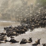 Abercrombie and Kent – The Great Migration Safari in Style 2016/2017